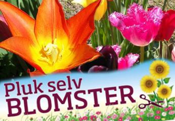 pluk-selv-blomster